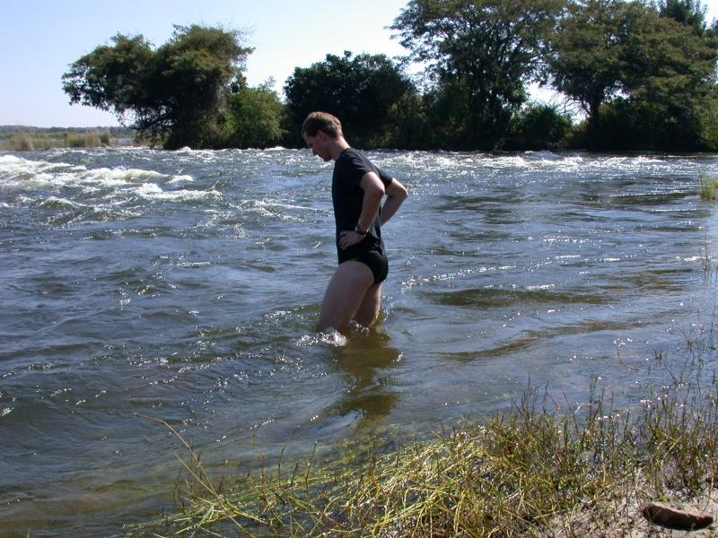 Image result for zambezi river crocs